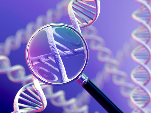 A magnifying glass focussing on a section of a DNA strand.