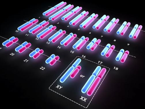 human-karyotype-567a11785f9b586a9e838782