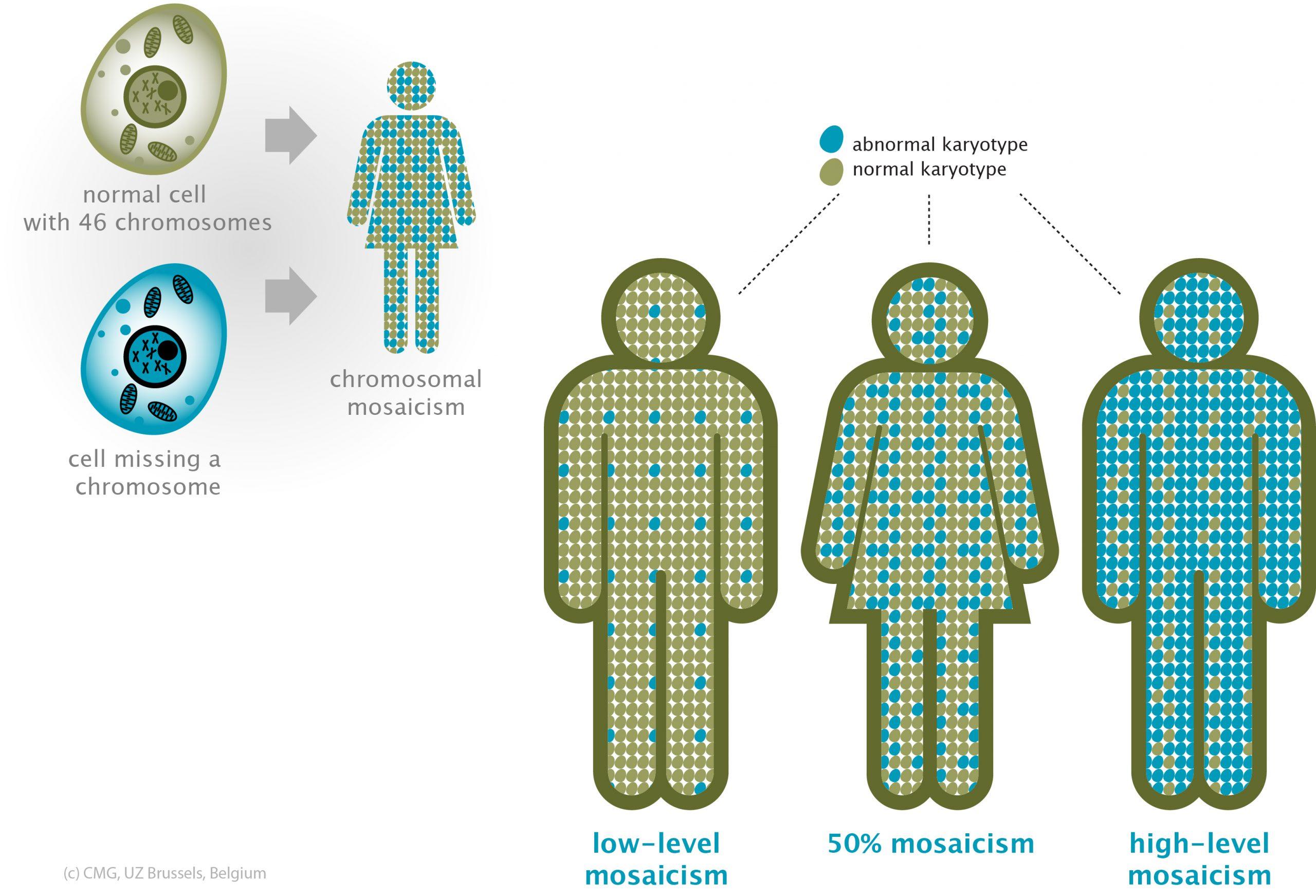 موزائیسم (mosaicism) به وجود دو یا چند رده سلولی با اطلاعات ژنتیکی مختلف که از یک سلول تخم (زیگوت) واحد در یک فرد منشا میگیرد اطلاق می گردد. در مقابل ، اگر رده های سلولی متمایز از زیگوت های مختلف مشتق شده باشد ، این اصطلاح اکنون به عنوان کایمریسم (chimerism) شناخته می شود. موزائیسم پس از تشکیل سلول تخم ایجاد می شود.