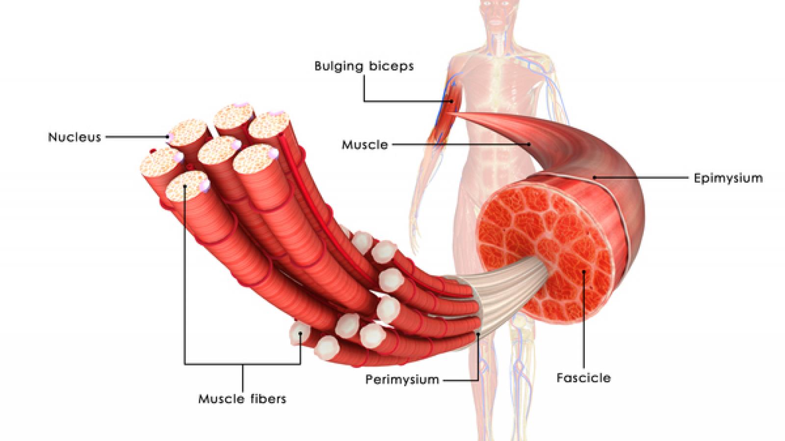 دیستروفی ماهیچه ای امری دریفوس کمیاب است.این اختلال ژنتیکی که به صورت کند پیش می رود و ماهیچه های بازو,پاها,صورت,گردن,ستون فقرات و قلب را تحت تاثیر قرار می دهد.